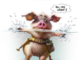 Svensk Pig illustration